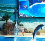 海洋馆,又称海洋世界,神秘奇特的海洋世界